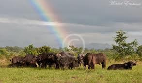 SA rainbow (fromsaffascapes.blogspot.com)